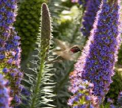 Hummingbird Flowers Use Hummingbird Flowers To Attract More Hummingbirds