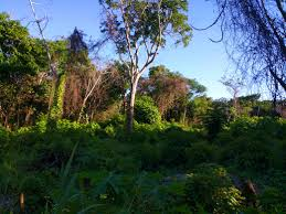 utila island real estate services and property for sale