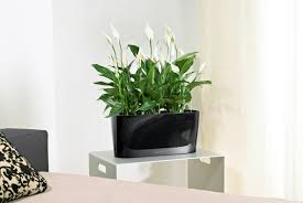 self watering planter plants take care of themselves with new lechuza self watering planters