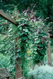 high octane vines wisconsin gardening