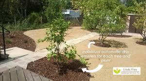 BeforeAfter Renovated California Backyard Orchard Linda Vista - Backyard orchard design