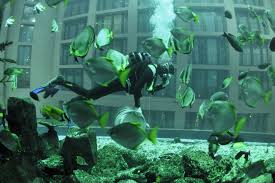 Bill Gates Aquarium In House by Largest Free Standing Aquarium I Like To Waste My Time