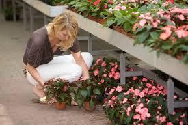 utah native plants garden stores u2014 cactus u0026 tropicals