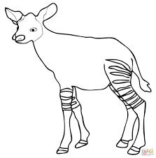 baby okapi calf okapi coloring page free printable coloring pages