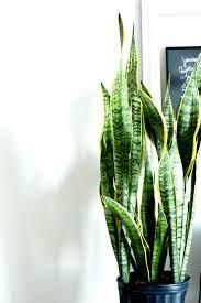 indoor plants images 3 indoor plants you probably can u0027t kill sarah linden