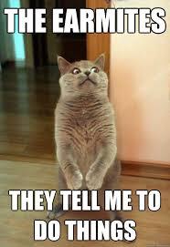 Mad Kitty Meme - the earmites cat meme cat planet cat planet