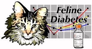Blind Cat Sanctuary Blind Cat Rescue And Sanctuary Feline Diabetes