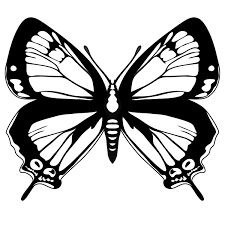butterfly black and white animals butterfly black white outline 1