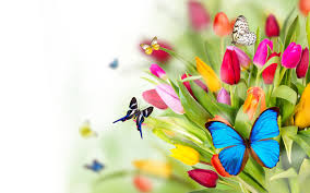 butterfly flower butterfly backgrounds flowers butterflies wallpapers pictures