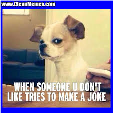 Dog Jokes Meme - dog memes clean memes the best the most online page 38