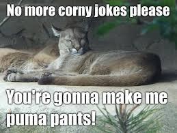 corny jokes with images really corny jokes quotes