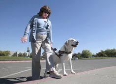 Dogs For The Blind Jobs Traveling Across Alaska With Lifesaving Serum Dogs With Jobs