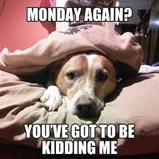 Funny Memes About Monday - best funny monday memes we hate monday funny monday memes
