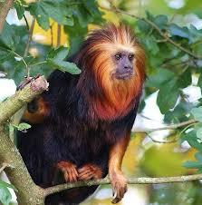 18 best monkey tattoo images on pinterest monkey tattoos