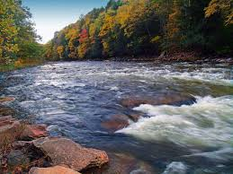 Pennsylvania Forest images You 39 ll be blown away by these 10 amazing state forests in pennsylvania jpg