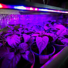 what are the best led grow lights for weed the best led grow lights jan 2018 green and vibrant