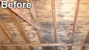 attic mold removal by moldcode cleaning youtube