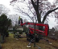 tree removal equipment arbor tree experts