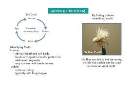 wyoming stream macroinvertebrates moths lepidoptera life