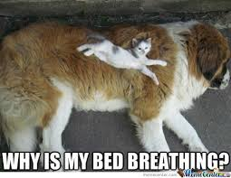 Animal In Bed Meme - breathing bed meme slapcaption com cute cuddly animals