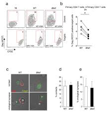hiv 1 nef promotes the localization of to the cell membrane