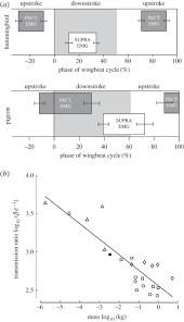 evolution of avian flight muscles and constraints on performance