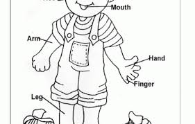parts of the body coloring pages for preschool human body coloring pages for kindergarten ecordura com