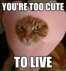 Cute Valentine Meme - you re too cute to live valentine cat quickmeme