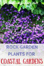 rock garden plants for the coastal garden