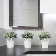 plante pour cuisine plantes vertes gamm vert