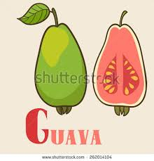 guava free vector download 2 free vector for commercial use