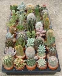 resume modernos terrarios suculentas imagen 10 decoracion plantas pinterest suculentas cactus y