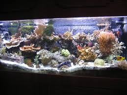 best fan for aquarium let s add fans to my reef reef2reef saltwater and reef