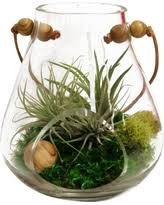 new deals on plant terrarium containers