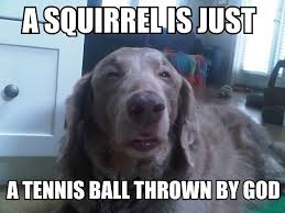 Hyper Dog Meme - 44 of the happiest dog memes that will keep you laughing for hours