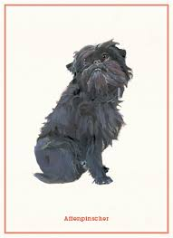affenpinscher skin problems dog postcards polly horner 9781856699341 amazon com books