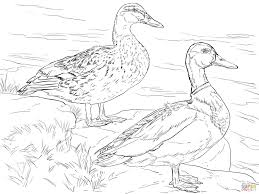 download ducks coloring pages ziho coloring