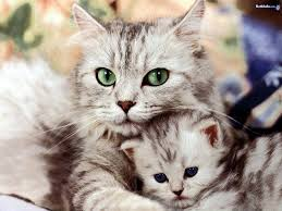 cute cats wild life