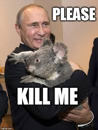 Putin Memes - putin with koala vladimir putin know your meme