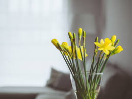 free images branch plant house flower glass home vase