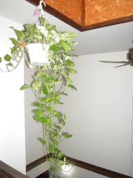 Home Decorating Plants Indoor Plants That Purify Air In Living Spaces