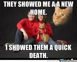 Portrait Meme - portrait cat by darkknight1 meme center