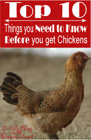 18 best images about raising chickens on pinterest a chicken