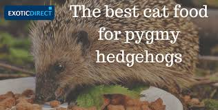 what can pygmy hedgehogs eat the best diet for your pet hedgehog