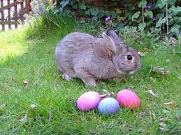 did the idea of the easter bunny come from