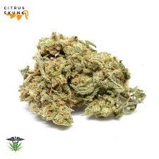 cannabis cannabis dry flower buy my weed online