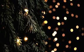 tree fir branches garland lights new year 6986531
