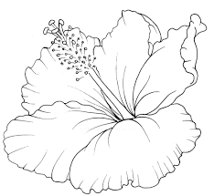 hawaiian flower coloring book page pinterest hawaiian