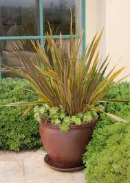 best ornamental grasses for containers and how to grow them