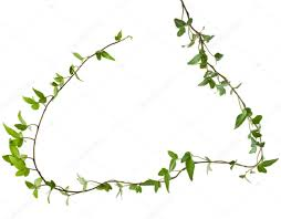 frame for climbing plants images